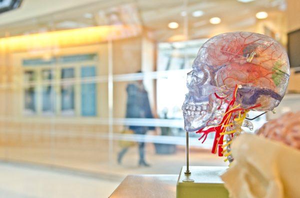 Emotionell intelligens vinner i längden